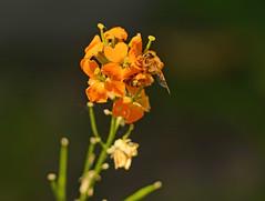 Flower with Friend