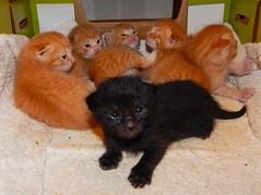 We Have Kittens!! (starmist1) Tags: kittens cats babies eyesopen boxofkittens