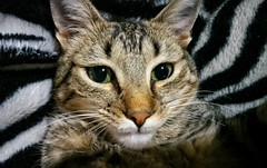 Gato (valeriaibáñez) Tags: gato naturaleza animales