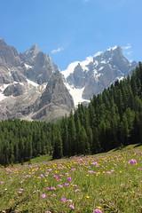 Val Venegia (stgio) Tags: valvenegia passo rolle passorolle montagna mountains dolomiti trentino primiero fioritura fiorialpini alpi panorama landscape paesaggio estate