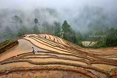 _U1H0906 Terraces,Mu Cang Chai,0617 (HUONGBEO PHOTO) Tags: tâybắc sigma1224mm canoneos1dsmark3 mùađổnước ruộngbậcthang yênbái mùcangchải dếxuphình asian peaceful rain people northwestvietnam hill photography farmer countryside clouds trees vietnamlandscape vietnamscenery scenery terraces fog highland outdoor landscape