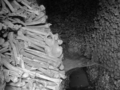 DOWNSTAIRS (LitterART) Tags: steiermark knochen gruft gewölbe totenschädel skull bones deutschfeistritz vanitas vanity beinhaus kirchberg