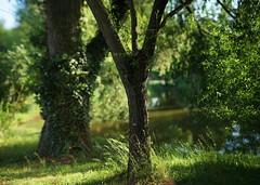memory of the park (Amselchen) Tags: bokehpanorama bokeh blur dof depthoffield season summer plants light sony alpha7 samyang 85mmf14