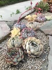 cactus-line (kkokey7) Tags: align cactus plant