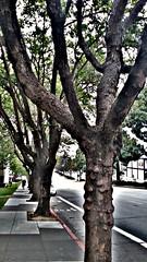 Geary Boulevard @ Laguna (sftrajan) Tags: gearyboulevard trees hdr edited sanfrancisco