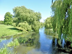 Kentish River Stour (Conundrum37) Tags: river stour godmersham kent green