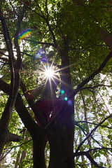 Girl in the tree (grundi1) Tags: sony alpha 68 a86 ilca 1770 f2845 dc baum sonne tree sun sunbeams sonnenstrahlen laub leaf sigma1770f2845dcmarco sigma nature