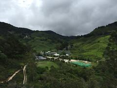 Sungai Palas Boh Tea Estate (iparky) Tags: cameronhighlands malaysia sungaipalasbohteaestate sungaipalas bohtea boh tea