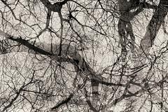 Eighteenth Disintegration (pni) Tags: monochrome tree sky branch trunk multiexposure multipleexposure tripleexposure helsinki helsingfors finland suomi pekkanikrus skrubu pni