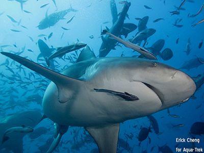 Shark @ ECheng