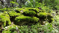 Muretto a secco (Gaia D.) Tags: murettoasecco muschio bosco collinaesttrento sassi sasso stonewall stone sottobosco