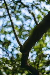 Observa (Watch) (Dibus y Deabus) Tags: gijon asturias españa spain naturaleza nature arbol tree canon 6d helios helios44 parqueisabellacatolica