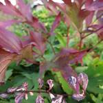 Garden Pots 2014 thumbnail