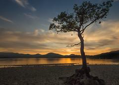 Milarrochy bay sunset (robdonnelly) Tags: milarrochy milarrochybay lochlomond scotland loch lochlomondandthetrossachs lake water longexposure