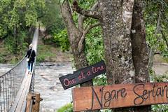 _DSC3717.jpg (MudflapDC) Tags: plains serian eastafrica kenya safari bridge marariver maranorth ngareserian maasaimara grassland rope vacation wildlife mara alexwalker melissa