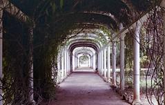 img223 (ropiminto) Tags: jardim ríodejaneiro 35mm analógica revueflex5005 revueflex parque jardínbotánico túnel vegetación enredaderas perspectiva