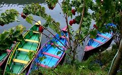 NEPAL, In Pokhara, Am Phewa-See, 16151/8443 (roba66) Tags: boot boat bootebunt farbenfroh colourful see lake phewasee reisen travel explore voyages roba66 visit urlaub nepal asien asia südasien pokhara