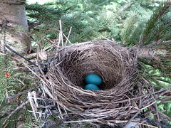 Nature (KristinLunaLynn) Tags: eggs bird nest blue egg nature frog toas rabbit hare brown bunny grass spring animal forest woodland creatures