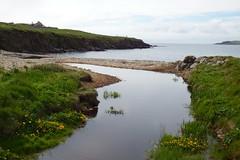 Doing the Hoswick Walk (nz_willowherb) Tags: scotland shetland hoswick flora marshmarigold calthapalustris hoswickburn kingcup