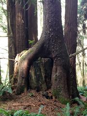 SequoiaPark032413d (homeboy63) Tags: spring 2013 humboldt sequoiapark eureka fauna