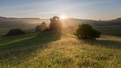 Golden morninglight (Sebo23) Tags: morgenstimmung morninglight morgenlicht sonnenaufgang sonnenstrahlen sonne sun sunrise sunbeams golden landschaft landschaftsaufnahme landscape güttingen nature naturaufnahme gegenlicht licht lichtstimmung canon6d canon16354l