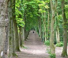 Promenade dominicale (JDAMI) Tags: promenade marche joggeuse bois allée feuilles vert arbres troncs nikon d600 tamron 2470 amiens saintfuscien somme 80 picardie france hautsdefrance