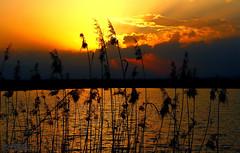 Sunset at Maharloo (Mahmoud R Maheri) Tags: sunset maharloolake maharloo iran shiraz reeds pond lake sky burningsky