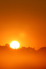 Foley, Alabama (fisherbray) Tags: fisherbray usa unitedstates alabama baldwincounty foley canon eosrebel eosrebelt6 gulfcoasthotairballoonfestival balloon hotairballoon sportscomplex sunrise fog nebel sky