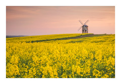 Chesterton Gold (Vemsteroo) Tags: chesterton windmill chestertonwindmill rapeseed crops sunset evening dusk beautiful golden yellow architecture canon 5d mkiii 2470mm leefilters circularpolariser landscape rural field agriculture farming farm warwickshire warm nature outdoors england