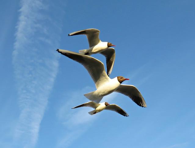 Pile Of Gulls!
