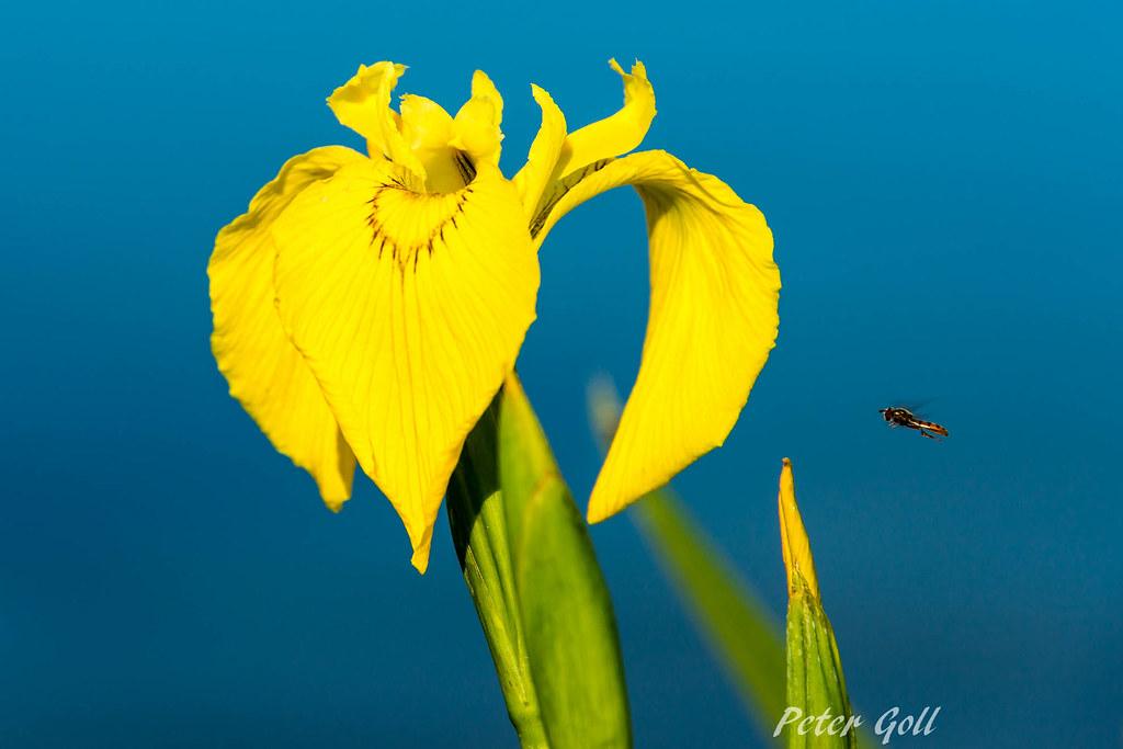 the world 39 s best photos of erlangen and lake flickr hive. Black Bedroom Furniture Sets. Home Design Ideas