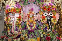 Snana Yatra 2017 - ISKCON-London Radha-Krishna Temple, Soho Street - 04/06/2017 - IMG_3036 (DavidC Photography 2) Tags: 10 soho street london w1d 3dl iskconlondon radhakrishna radha krishna temple hare harekrishna krsna mandir england uk iskcon internationalsocietyforkrishnaconsciousness international society for consciousness snana yatra abhishek bathe deity deities srisri sri lord jagannath baladeva subhadra 4 4th june summer 2017