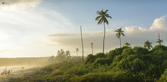 Treasure Island (Sid da' Cool) Tags: vengurla maharashtra india in coconuts coconuttrees goldenhour beachbodies kokan clouds panorama grass coconut