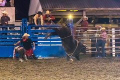 DSC_4391-Edit (alan.forshee) Tags: rodeo horse cow ride fall buck spin twirl bull stallion boy girl barrel rope lariat mud dirt hat sombrero
