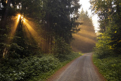 forest dawn (Lena Held) Tags: morning light fog foggy dawn sunrise way forest wood woodland trees plants oberpfalz bayern deutschland germany bavaria global world landscape sunbeams 1635 5dsr outside wildlife nature sunlight daylight mist misty