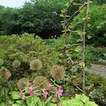 Heather Garden, Fort Tryon Park thumbnail
