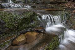 North Georgia Creek (Blackthroated Blue) Tags: northgeorgiawaterfalls joe creek rabun county us forest service clear clean cascade waterfall