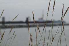 (LuposAter) Tags: bokeh cuxhaven nordsee meer northsee sony alpha
