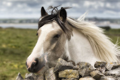 Photo of wall horse