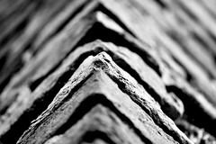 Ponte di Castelvecchio, Black & White (mao832) Tags: details castello castle triangolo ritratto portrait natura nature triangle d5500 nikon bn bw nero bianco white black biancoenero blackandwhite italy italia scaligero verona castelvecchio bridge pone