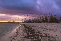 Beach-DSC_6301 (fatima_suljagic) Tags: melbourne melbournephotography melbournephotographer fineartprints fatimasuljagicmelbourne landscapes landscapephotography postcards nature naturephotographer