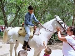 Día de San Isidro. Romería en Alameda (Málaga) (lameato feliz) Tags: alameda jinete caballo fiesta romería