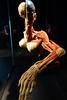 Kadavro 04722 (Omar Omar) Tags: losangeles losángeles losangelesca losángelescalifornia la california californie usa usofa etatsunis usono californiasciencecenter museum musée muzeo museo sciencemuseum museodeciencias bodyworlds bodywoks cuerpohumano horror creepy preservedhumanbodies skinnedhumans plastination plastinación kadavro cadaver cadavre cadáver