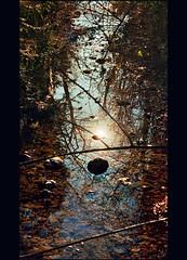 Stare with me in the stream (Katarina 2353) Tags: katarina2353 katarinastefanovic