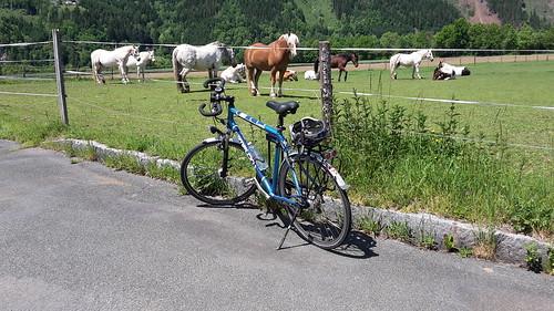 radl und pferde
