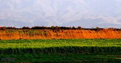 Afternoon in Maharloo (Mahmoud R Maheri) Tags: landscape fields mountain iran maharloo fars shiraz afternoonsun evening sundown