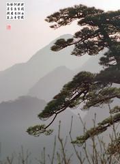 黃山 (H Sinica) Tags: 黃山 huangshan anhui china pine tree mountain