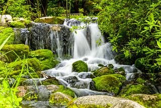 Serene Waters