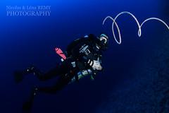 Wire coral & Nicolas (Nicolas & Léna REMY) Tags: africa marinelife nauticam ocean rebreather revo redsea wildlife coral underwater inon sudan afrique corail diving mer merrouge photography plongée recycleur scuba sea soudan wild