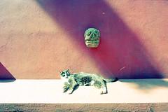 Mexico Gato (Past Our Means) Tags: canon ae1 kodak film 35mm travel ektar 100 analog indiefilmlab explore kodakfilm ektar100 canonae1 analogue indiefilm filmphotography filmisnotdead istillshootfilm water 28mm road adventures wanderlust newyorkcity vintage lowlightphotography mexico gato mexican cat kitty sun sunny relax